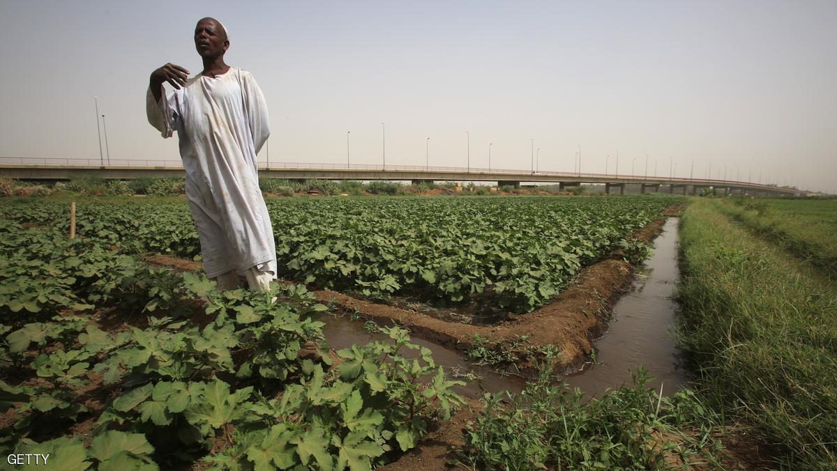 السعودية تستصلح مليون فدان في السودان