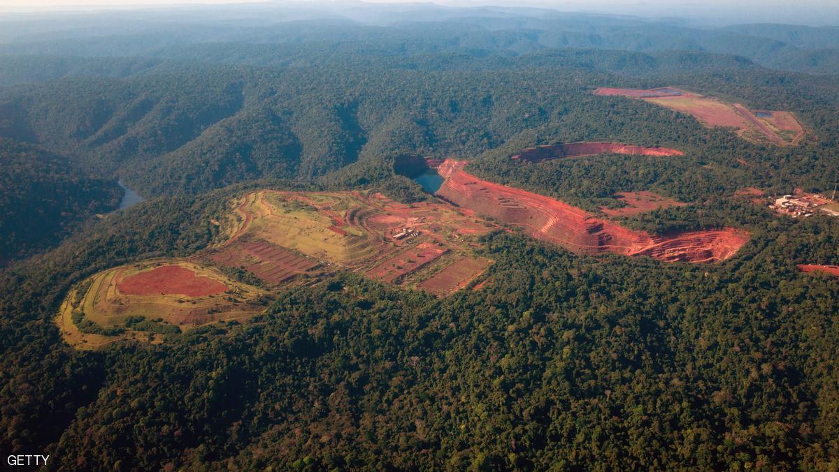 الأمم المتحدة: يمكن توفير الغذاء للعالم دون إزالة الغابات