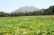 وادي العبادلة : مناظر طبيعية وسط الجبال العالية .