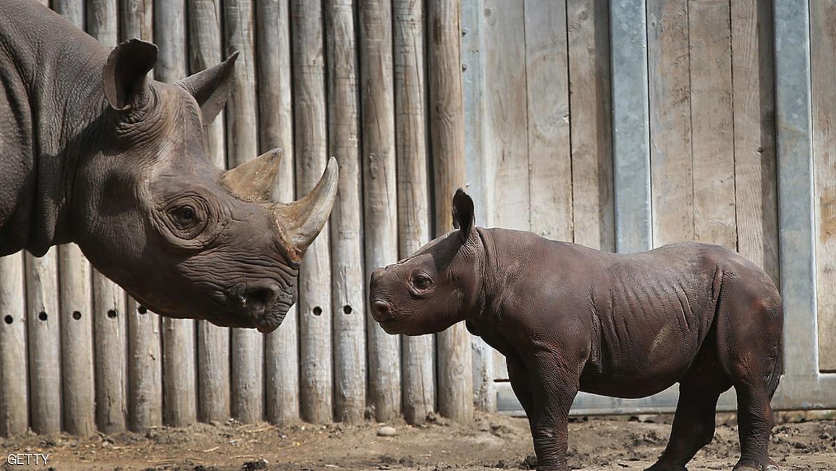 اجتماع دولي لمناقشة المخاطر التي تهدد وحيد القرن