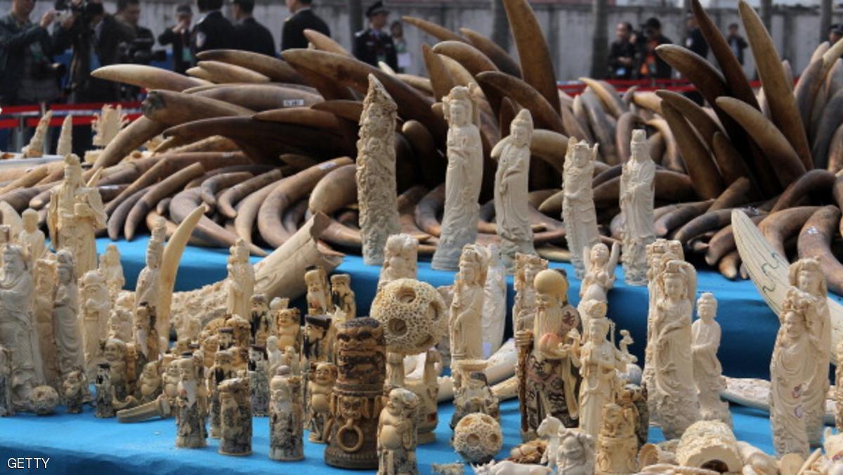 مؤتمر للحياة البرية يناقش إغلاق أسواق العاج