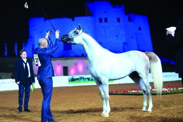 الفجيرة جاهزة لاستضافة  النسخة الثانية لبطولة جمال الخيل العربي