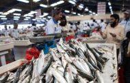 توازن في أسعار السمك بالفجيرة