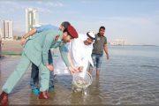 شرطة الفجيرة وجمعية الصيادين تطلقان 100 ألف من إصبعيات الأسماك