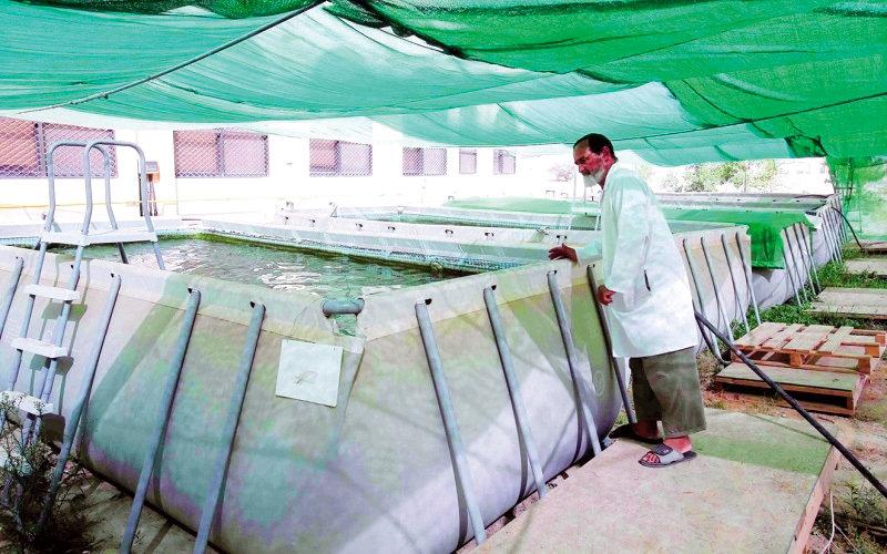 «التغير المناخي والبيئة» تسمح بإنشاء مزارع للشعري والصافي
