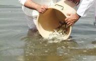 اعتماد 8 مبادئ لدعم استزراع وتربية الأحياء المائية في الدولة