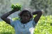 سريلانكا.. حقائق يجهلها كثيرون عن