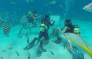 فنان يبدع لوحات مدهشة وسط الأسماك والشعاب المرجانية