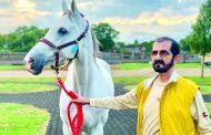 فارس العرب.. عشق بلا حدود للخيول