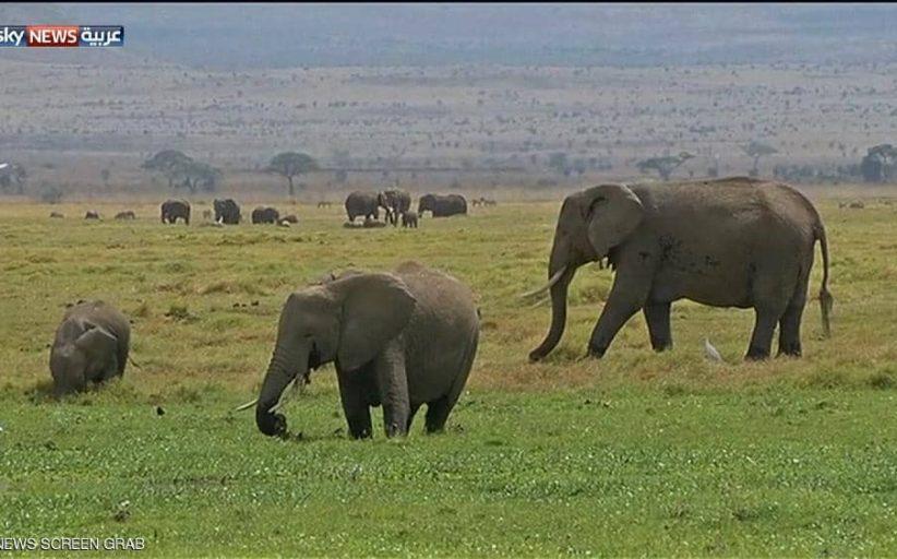 زيمبابوي.. نفوق 200 فيل في أقل من شهرين