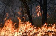 اندلاع مئات الحرائق في أستراليا