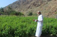 الزراعة والطبيعة الخلابة مع الوالد حميد اليليلي في