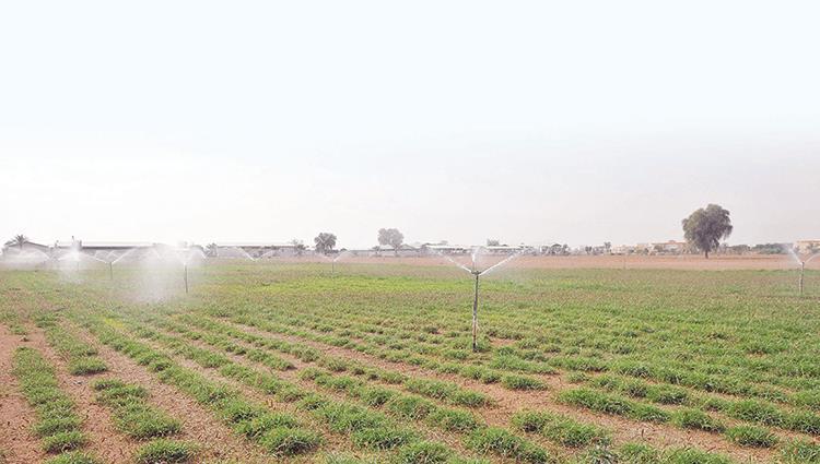 السماح ببيع وتداول الأراضي الزراعية بإمارة أبوظبي