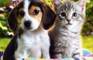 لأول مرة.. مدينة صينية تحظر أكل الكلاب والقطط