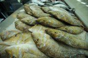 «التغير المناخي والبيئة» تقرر السماح بصيد الشعري والصافي بدءً من الأحد المقبل