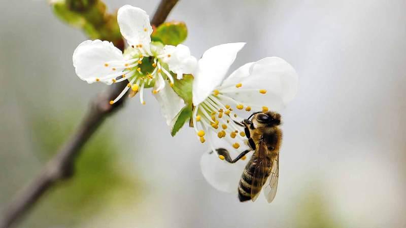 في يومه العالمي.. النحل يستفيد ويتأثر بإغلاقات