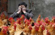 قرار تاريخي من الصين بشأن ذبح وبيع الدواجن