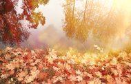 الاعتدال الخريفي.. الثلاثاء أول أيام الفصل