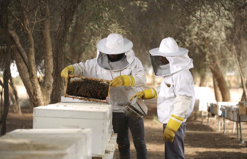 «التغيّر المناخي»: 6 مواسم لإنتاج العسل في الإمارات