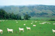 نيوزيلندا تعلن حالة الطوارئ المناخية
