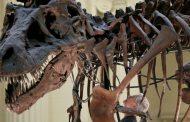التيرانوصورات أطاحت خلال نموها بأجناس ديناصورات أصغر حجماً