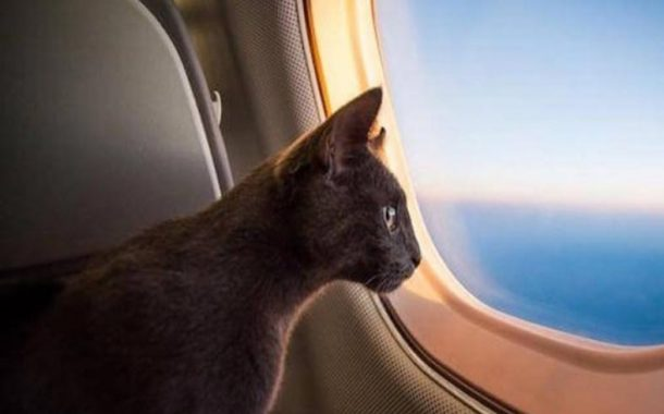 ماذا فعل طاقم طائرة ركاب سودانية تفاجأ بوجود قطة بعد الاقلاع؟