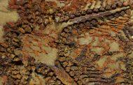 اكتشاف أثر أقدم حيوان مائي في العالم