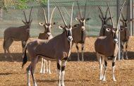 حديقة الحيوانات بالعين تحافظ على التنوع البيولوجي وفق أعلى المعايير