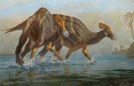 اكتشاف فصيلة جديدة من الديناصورات في المكسيك