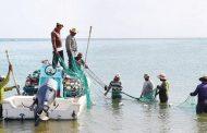 «صيادو الفجيرة»: 50% انخفاضاً في أسعار الأسماك بعد عودة الصيادين