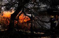 حريق مهول يلتهم غابات الصنوبر شمال غرب أثينا