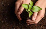 دور حيوي للنباتات المحلية في حماية التربة